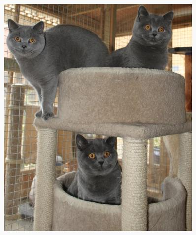 Some of our residents at Adryn cat resort
